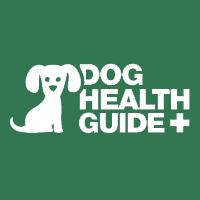 Dog Eye Infections Symptoms and Treatment